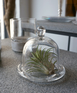 Glass dome for candle(mini)